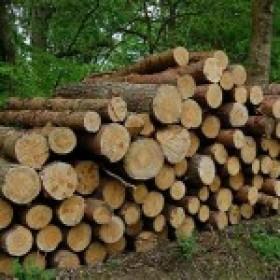 Norite parduoti mišką?