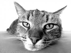 Katino veidas